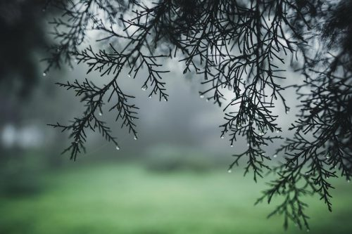 Come Fotografare Sotto La Pioggia : I Nostri Consigli